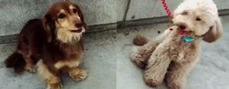 道枝家の愛犬