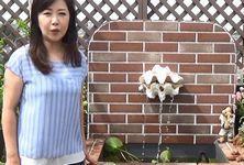 伍代夏子と屋上の壁泉