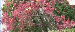 キムラ緑子家の庭の紅葉