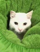 病院に行くときの愛猫
