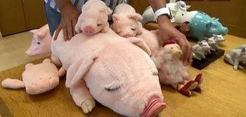 コレクションの豚