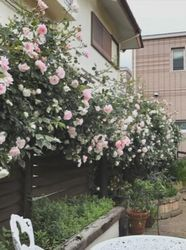 十朱幸代家の庭